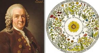 L'horloge florale qui marquait le temps en suivant l'ouverture des fleurs : l'idée poétique de Carl von Linné