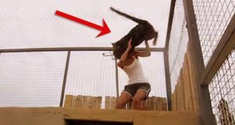 Questa guardiana del centro di recupero per felini riceve una particolare accoglienza dalla pantera nera