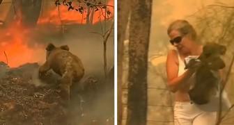 Australia: questa donna è corsa tra le fiamme per salvare un koala ustionato in difficoltà