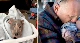 A puppy dog in an animal shelter gets excited when it recognizes the firefighter who had saved her from the streets