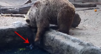 The strange behavior of a bear rescuing a crow