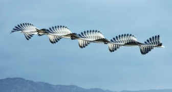 Questo fotografo cattura gli stormi di uccelli come se fossero delle affascinanti sculture in movimento