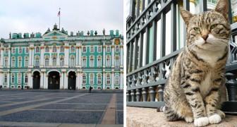 Die Katzen der Eremitage: Seit mehr als 200 Jahren schützen sie den prestigeträchtigen Palast vor dem Eindringen von Mäusen