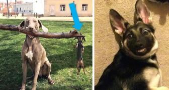 13 hilarische foto's van honden die ze in al hun hilariteit laten zien