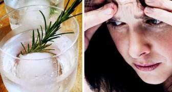 Boire de l'eau de romarin améliore notre mémoire : une étude britannique le suggère