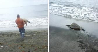 Este homem compra tartarugas marinhas do mercado para depois liberá-las no oceano