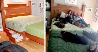 Esta pareja ha construido una cama especial para todos los perros salvados de los refugios que ahora viven en su casa