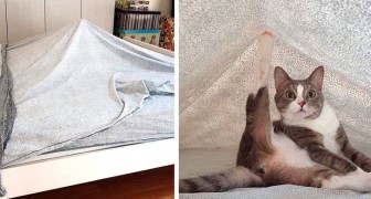 20 photos that confirm how much our pet cats have a strange sense of humor