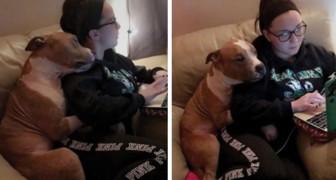 El pitbull adoptado no logra dejar de abrazar a la joven que lo ha sacado de la perrera