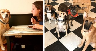 Esta cafeteria francesa permite aos clientes de fazer amizade com os cães abandonados e de adotá-los