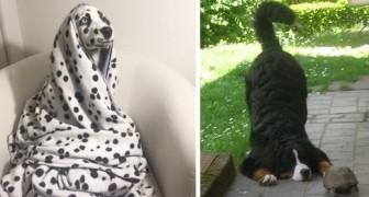 17 unwiderstehliche Fotos von Hunden mit einer starken theatralischen Persönlichkeit