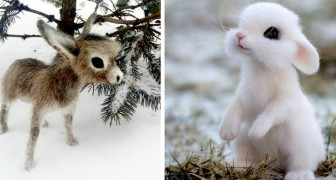 Quest'artista russa realizza piccoli animali selvatici utilizzando la tecnica della lana infeltrita