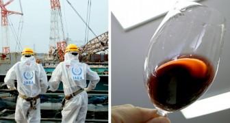 In kalifornischen Weinen gibt es leichte radioaktive Spuren von Fukushima: Dies wird durch Untersuchungen bestätigt