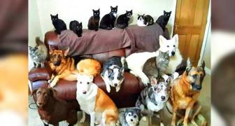 Esta mulher conseguiu fazer uma foto dos seus 17 animais de estimação todos juntos