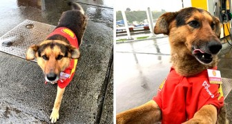 Este perrito da la bienvenida a los clientes de una bomba de gasolina con un gran uniforme, regalando momentos de alegría