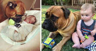 Este perro gigante es la cuidadora perfecta: cada vez que siente al bebé llorar, le lleva un juguete para calmarlo