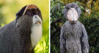 11 dieren waaraan de natuur een aspect wilde geven dat niet onopgemerkt bleef