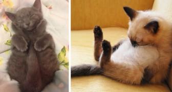 18 foto di gatti che si sono addormentati nelle posizioni e nei luoghi più assurdi