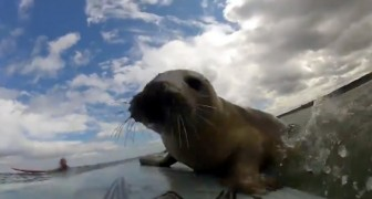 The beautiful experience of  two surfers  sharing the board with a new cute friend