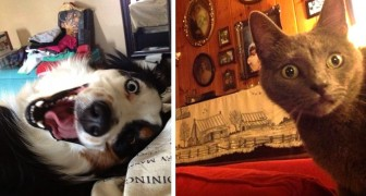 11 pets that surprised their human friends with their strange behaviors when they woke them up