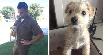 After seeing a driver abandon a puppy dog on a busy street, this UPS delivery driver stopped and saved it
