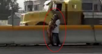 Een hond ligt aan de kant van de snelweg en de moedige reddingsoperatie beindigd deze tragedie