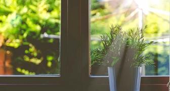 Pflanzen sind in der Lage, Ultraschall auszusenden, wenn sie unter Stress stehen: Das sagt die Forschung