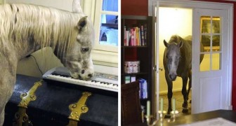 A horse enters a stranger's house and its owner confirms that the animal loves indoor spaces
