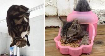 16 foto mostrano tutta la simpatia dei gatti che si ritrovano in situazioni e posizioni assurde