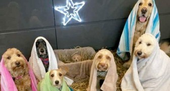 I cani di questo rifugio hanno messo in scena un divertente Presepe a quattro zampe