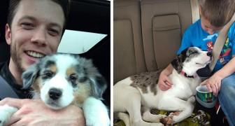 16 foto che mostrano il primo incontro tra cani adottati e i loro nuovi amici umani