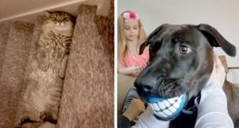 18 Schnappschüsse unserer Haustiere in witzigen Situationen