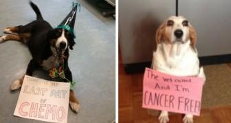 Ces braves chiens ont été immortalisés à la fin de leur combat contre le cancer