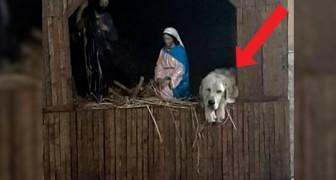 Ein verlassener Hund hat in der Krippe des Dorfes, neben Josef und Maria, Zuflucht gefunden