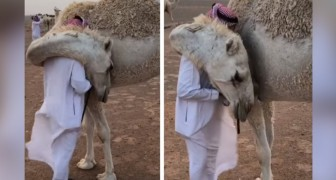 This man returned home desperate after losing a son and his camel comforts him with a warm hug
