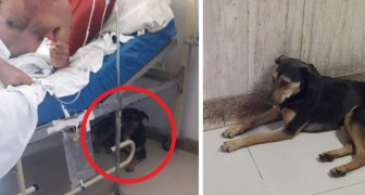 These two dogs followed their owner to the hospital so he would not be alone after his operation