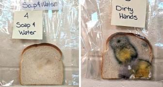 L'esperimento di un'insegnante ci mostra in modo chiaro cosa significa non lavarsi le mani e toccare il cibo