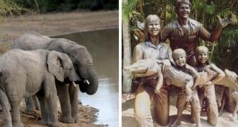 La famiglia di Steve Irwin aprirà un ospedale per gli elefanti in Indonesia in sua memoria