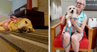 Dans cet hôtel, on peut s'occuper d'un chien pendant son séjour et décider ensuite de l'adopter ou non