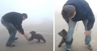 A little baby bear cub cannot stop embracing the man who saved it from a wildfire