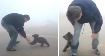 Ein Babybär hört nicht auf, den Mann zu umarmen, der ihn vor einem Waldbrand gerettet hat...