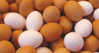 Nonostante si creda il contrario, le uova bianche e quelle marroni hanno lo stesso valore nutrizionale