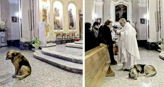 This dog goes to mass every day in the church where his lady owner's funeral took place, hoping to find her again