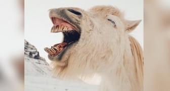 Een onderzoek toont aan dat degenen die zwarte humor waarderen, intelligenter en minder agressief zijn dan anderen