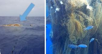 Sie finden einen riesigen Haufen von treibenden Fischernetzen: im Inneren Dutzende von Haien, die in einem tödlichen Netz gefangen sind