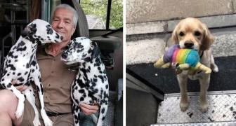 Su questa pagina Facebook i corrieri UPS pubblicano le foto dei cani che incontrano durante le consegne