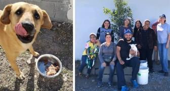 Un gruppo di donne ha creato una locanda per cani randagi, offrendo loro cibo e riparo