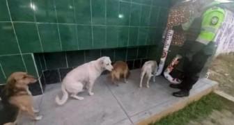 Alcuni cani randagi fanno la fila davanti ai dispenser di cibo e acqua che la polizia ha installato per loro