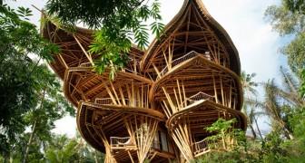 Questa donna ha abbandonato la sua carriera per costruire case di bambù in Indonesia