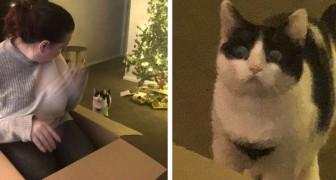 Este gato fica chateado quando descobre que a caixa não era um presente para ele